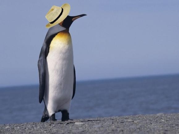 Penguinhat